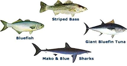 Different cape cod Fish